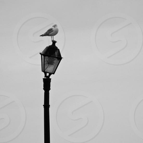 black and white bird on lantern photo