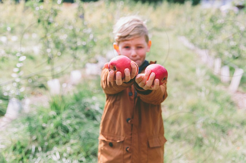 A young boy holding freshly picked apples out towards camera while standing in an orchard. photo