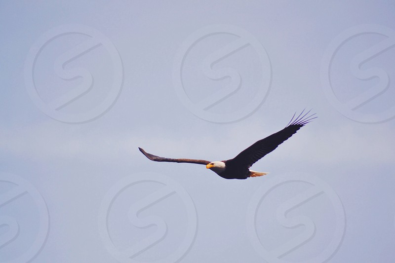 Yes. I was able to capture a photo of the nation's bird. photo