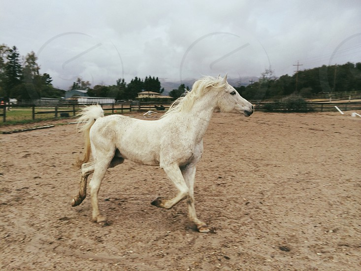 white horse walking on brown sand photo