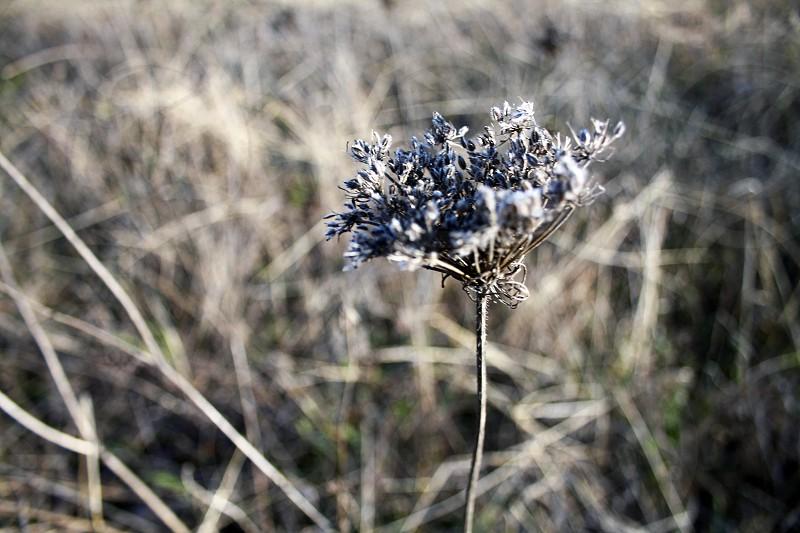 brown flower macro photography photo