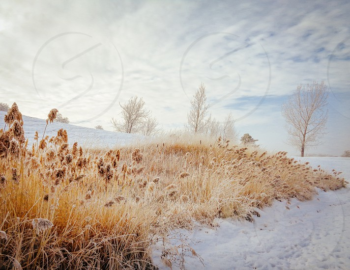 A Cold and frosty morning in Utah photo