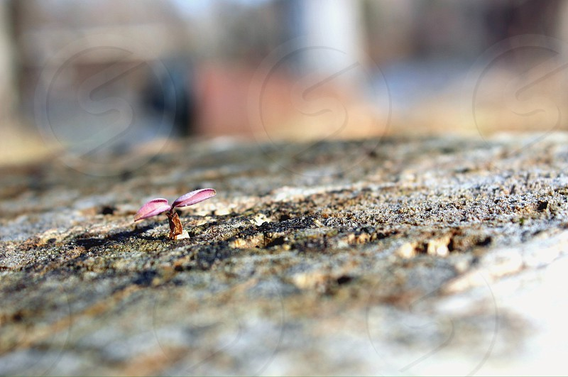 Young seed growing in a tree stump photo