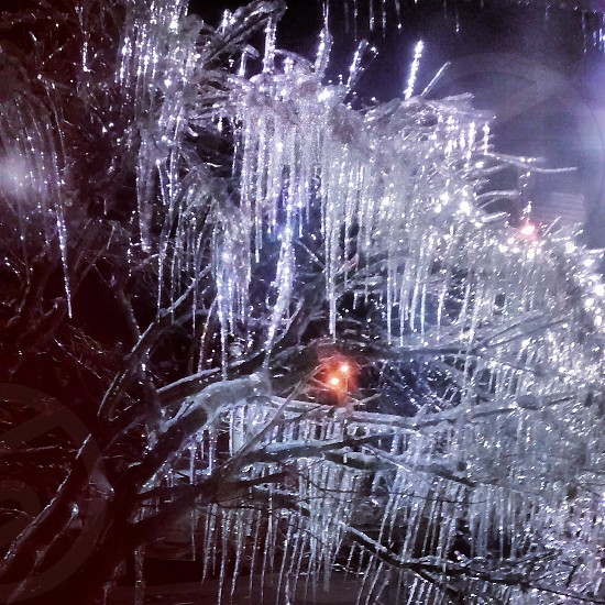 Tree covered in icicles at night photo