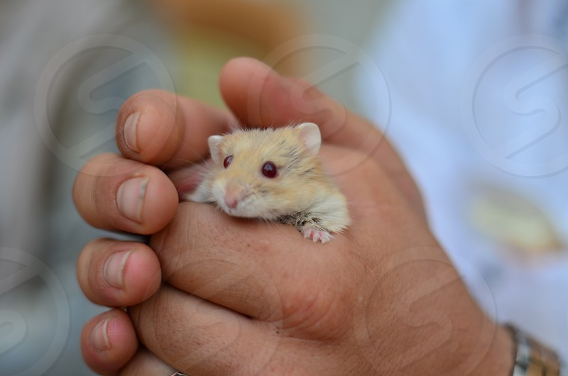 Holding a cute little hamster in hand photo