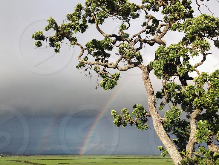 green tree photography photo