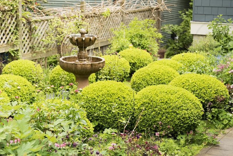 Backyard Garden items photo