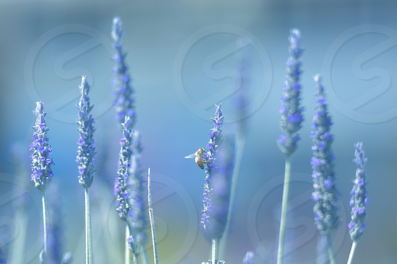 blue flower photo