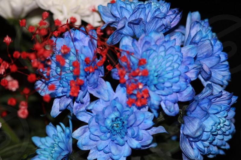 Blue.. photo