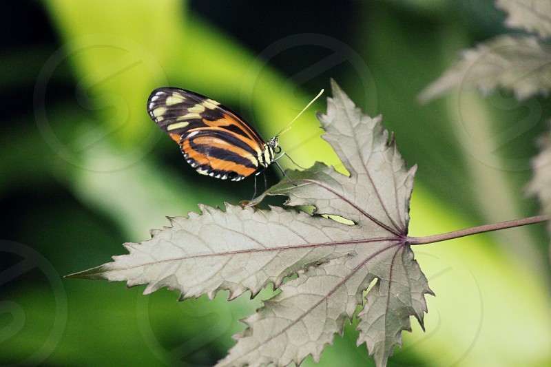 butterfly green orange wings fly photo