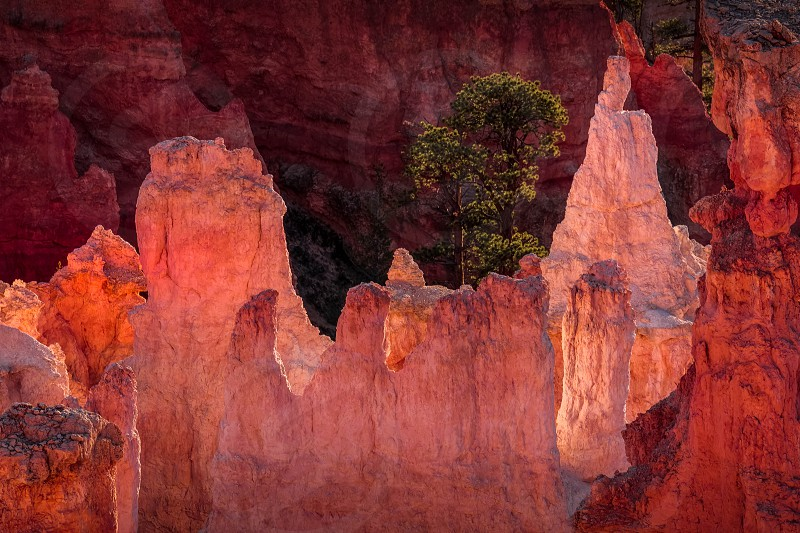 Detail from Bryce Canyon Southern Utah photo