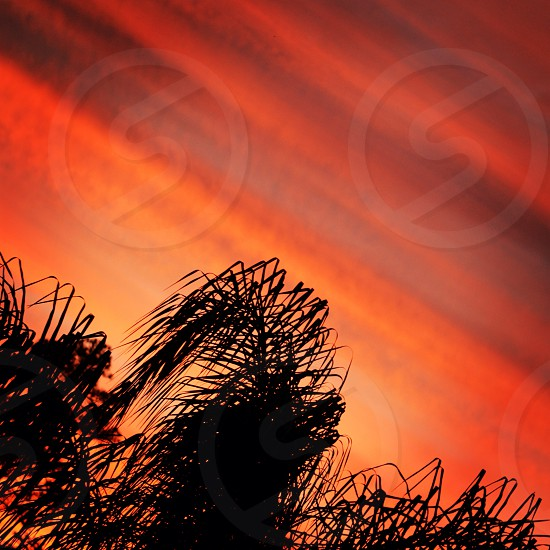 Orange and yellow sunset. photo