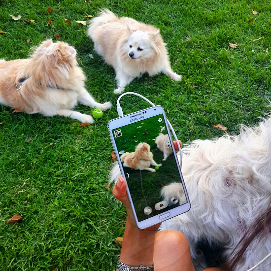 puppies cuteness overload!!! photo