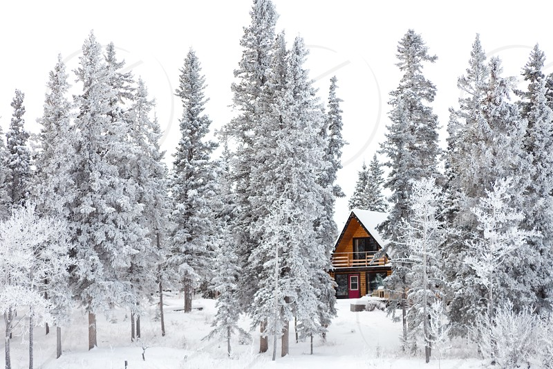 White Christmas in winter cabin in the woods between snow covered spruce trees photo