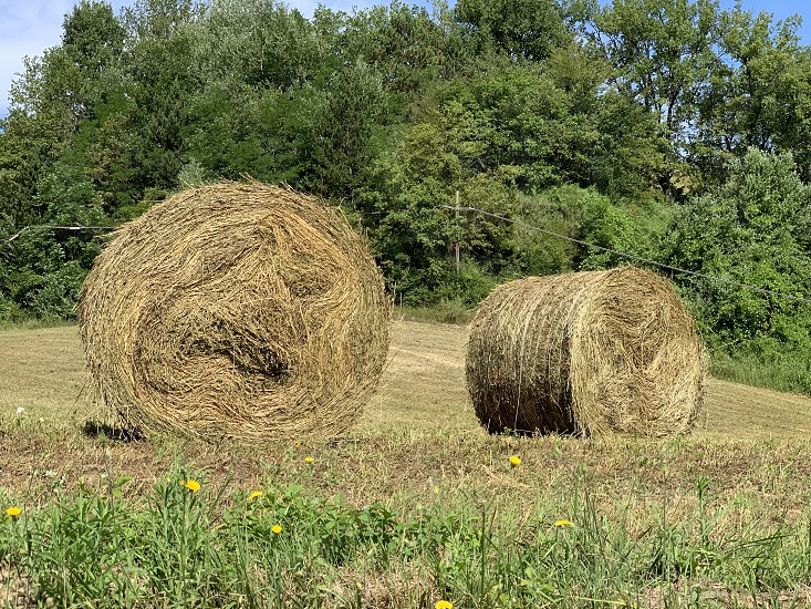 Rols of hay bales circle agricolturenature photo