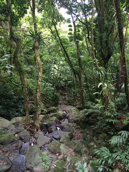 Puerto Rican Rainforest photo