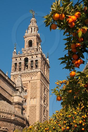 Giralda Seville photo