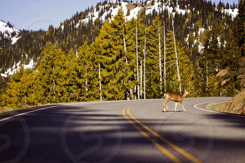 gray concrete road with brown deer in the middle photo