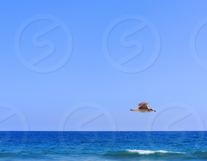 Seagull flies in the blue sky over a blue ocean and over a wave topped with white foam. photo