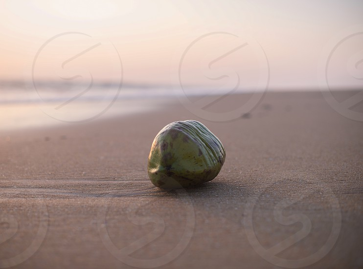 Coconut in the sand photo