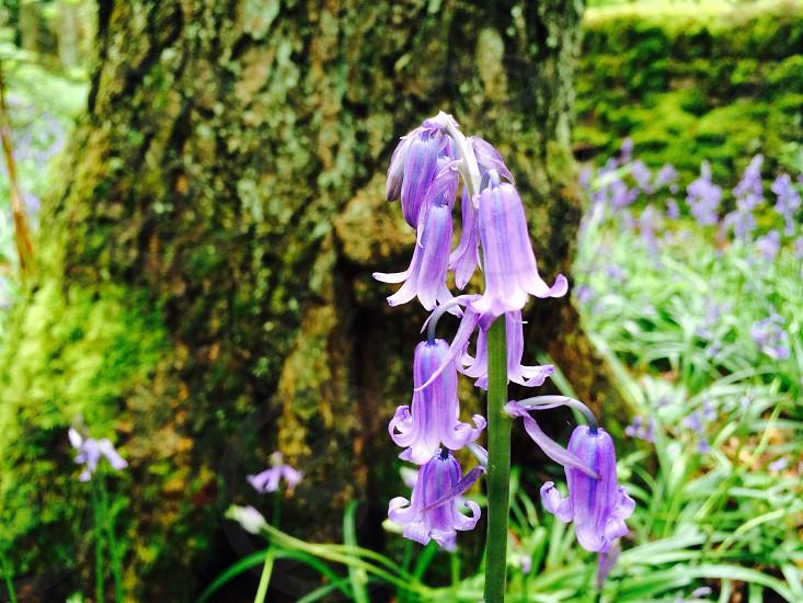Springbluebellswoodswildlifebarktreestemgrassmoss photo