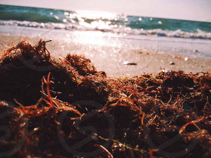 sandy beach view photo