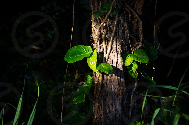 green leaves on a tree trunk photo