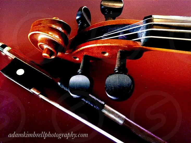 violin strings photo