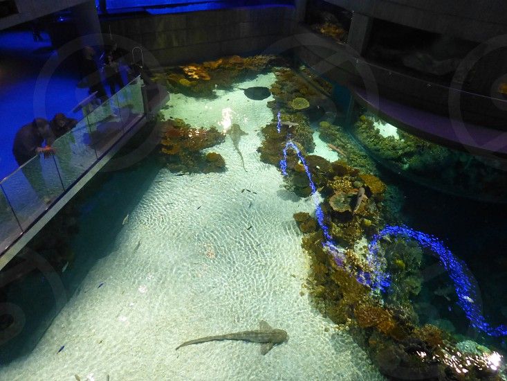National Aquarium in Baltimore photo