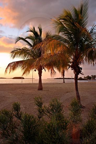 The perfect sunset spot on Big Pine Key. Florida. photo