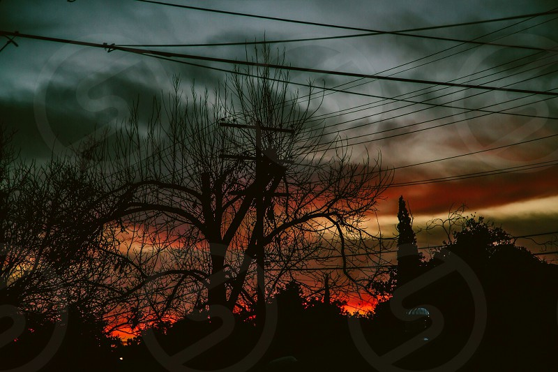 silhouette of trees and powerlines photo