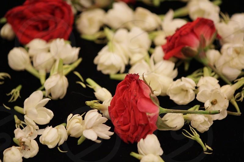 red rose near white flower photo