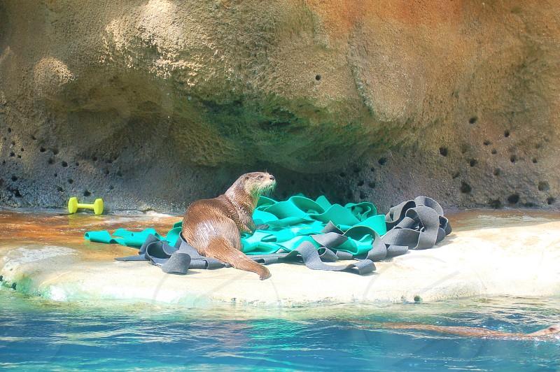 Otter at Virginia Beach Aquarium photo