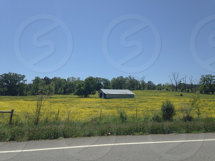 grey barn house on yellow flower field and green tall trees photo