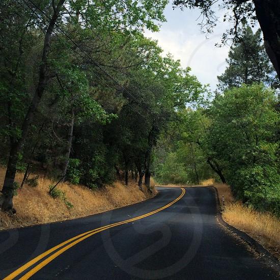 green forest near black asphalt road photo