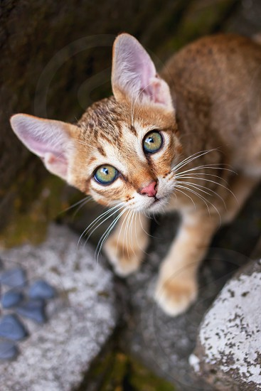 red kitten sitting on the ground and looking from below up photo