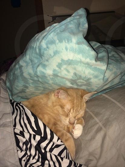 Sleeping cat photo