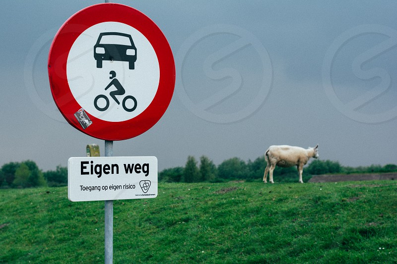 view of a white cow with a white and red sign photo