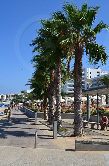 people walks beside palm trees photo