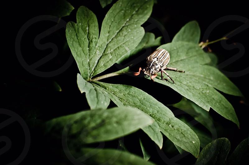 June bug at night  photo