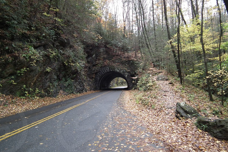 road tunnel in the forest photo