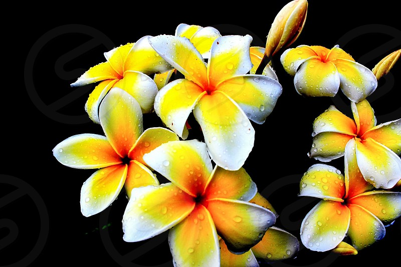 Droplets on flowers #beautiful #flowers #landscape #amazing #macro #droplets #nature  photo