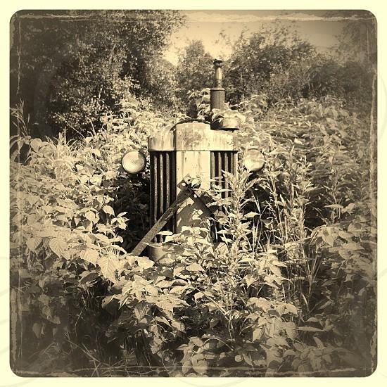 black and white garden photo photo