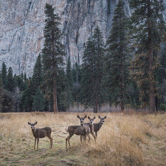 herd of deer on grass field with trees in background below rock cliffs during daytime photo