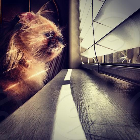 observing guard pup photo