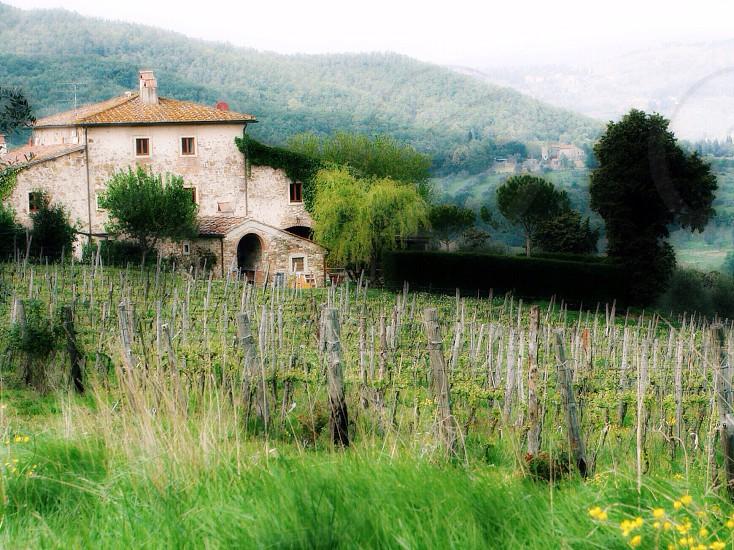 Firenze(Toscana)/Italy  photo