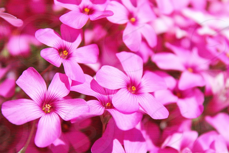 pink flower plant photo