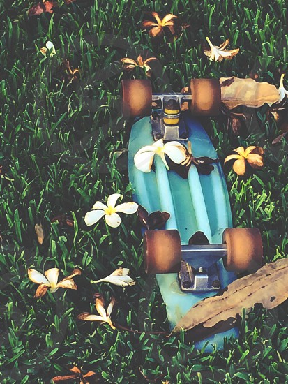 close up photo of green flip over penny board on green grass sorrounded with white 5 petaled flower photo
