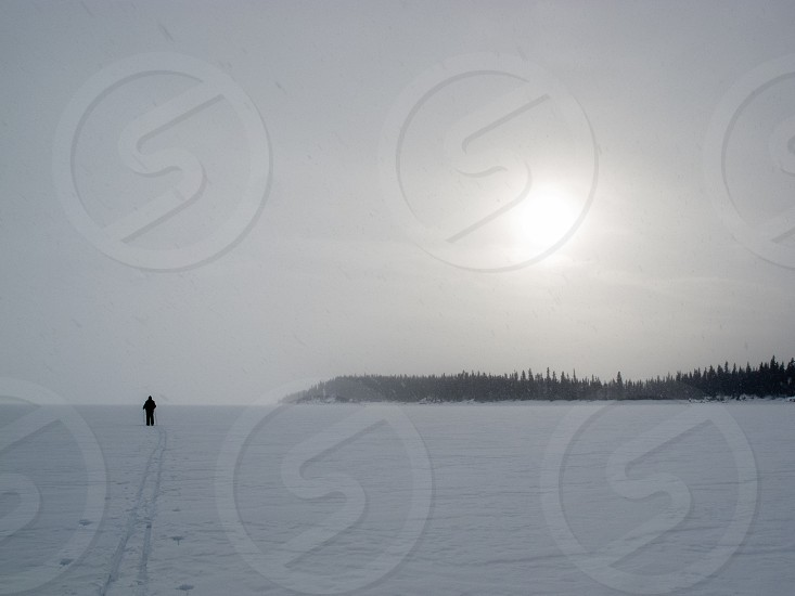 X-country skier in barren frozen blizzard winter landscape with sun shining through snowing clouds and drifting snow flurries photo
