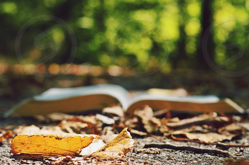 brown hard bound book open near the dry leaves photo